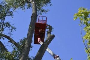 образец заявления на срубку дерева