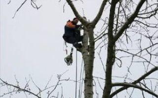 Нужно ли СРО на вырубку деревьев: что говорит закон и частный подход